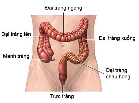 dai-trang-co-phai-ruot-gia-khong1