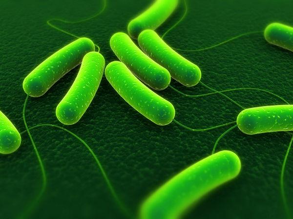 Vi khuẩn E.coli là gì
