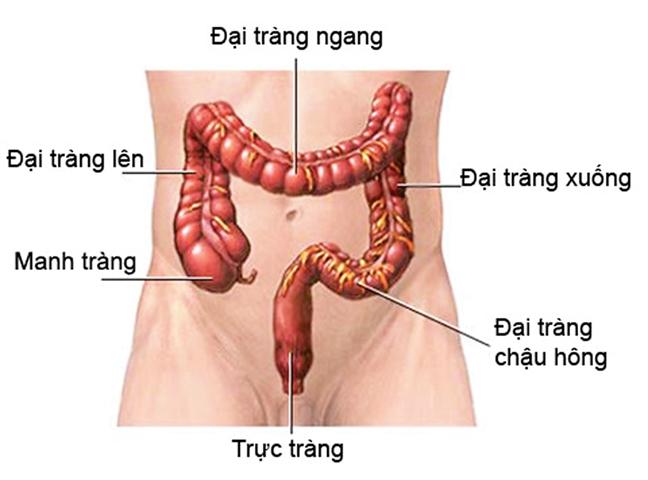 co thắt đường ruột do bệnh đại tràng