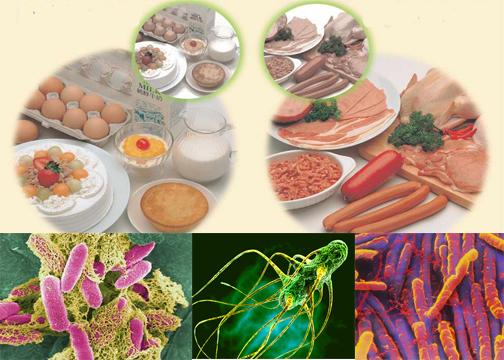 Ăn thức ăn bị nhiễm khuẩn là nguyên nhân gây rối loạn tiêu hóa ở trẻ em